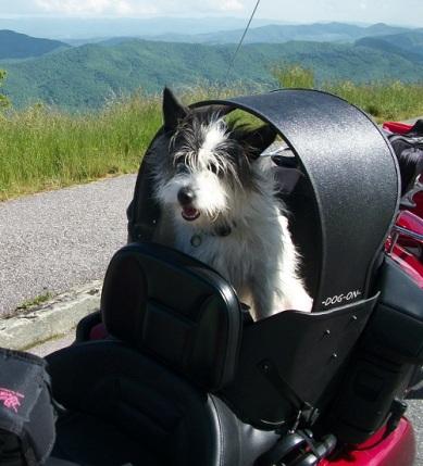 Dog Gone Kaysey seat